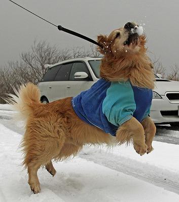 今週末は今シーズン最後(?)の雪遊び♪ PART2_c0216518_2027477.jpg