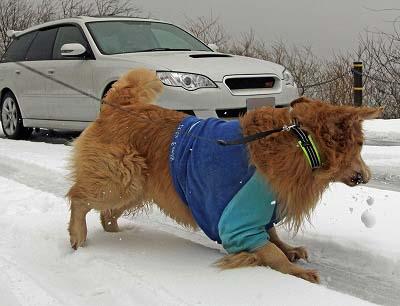 今週末は今シーズン最後(?)の雪遊び♪ PART2_c0216518_20275120.jpg