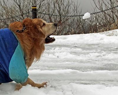 今週末は今シーズン最後(?)の雪遊び♪ PART2_c0216518_20282386.jpg