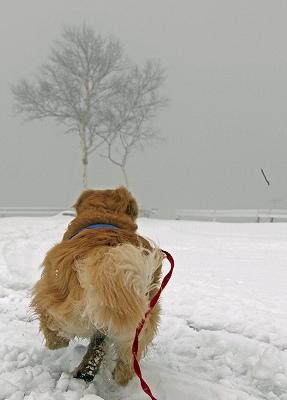 今週末は今シーズン最後(?)の雪遊び♪ PART2_c0216518_20332879.jpg