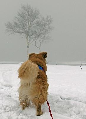 今週末は今シーズン最後(?)の雪遊び♪ PART2_c0216518_20334193.jpg