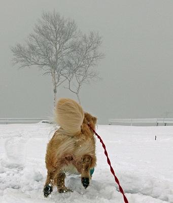 今週末は今シーズン最後(?)の雪遊び♪ PART2_c0216518_20335457.jpg