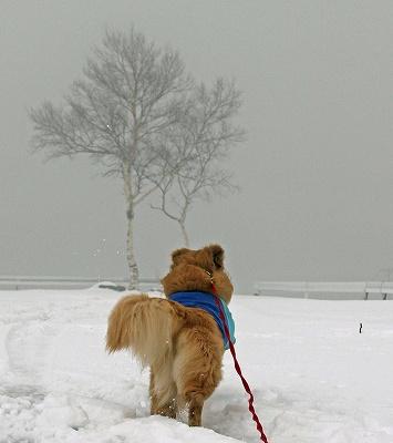 今週末は今シーズン最後(?)の雪遊び♪ PART2_c0216518_20342717.jpg