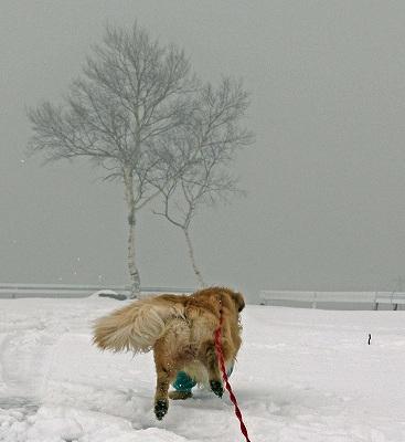 今週末は今シーズン最後(?)の雪遊び♪ PART2_c0216518_20343995.jpg