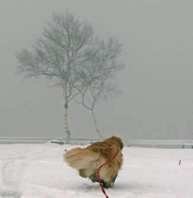 今週末は今シーズン最後(?)の雪遊び♪ PART2_c0216518_2034569.jpg