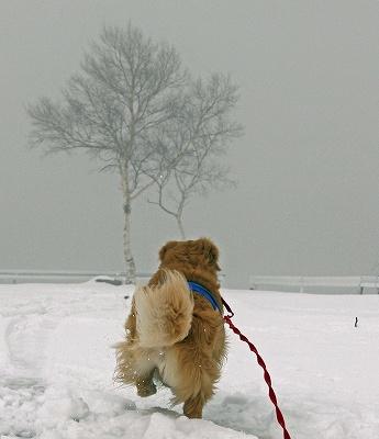 今週末は今シーズン最後(?)の雪遊び♪ PART2_c0216518_2034981.jpg
