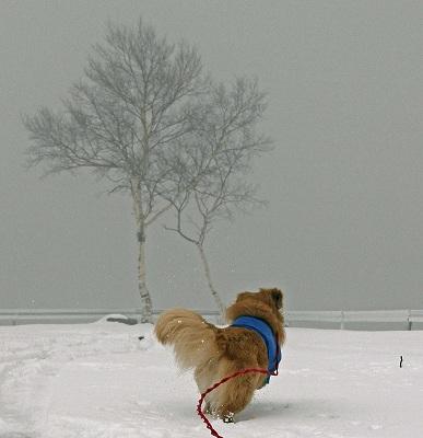 今週末は今シーズン最後(?)の雪遊び♪ PART2_c0216518_20351686.jpg