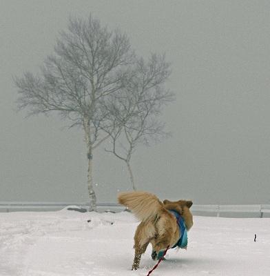 今週末は今シーズン最後(?)の雪遊び♪ PART2_c0216518_20352880.jpg