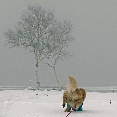 今週末は今シーズン最後(?)の雪遊び♪ PART2_c0216518_20353839.jpg