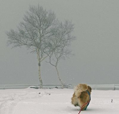 今週末は今シーズン最後(?)の雪遊び♪ PART2_c0216518_20354955.jpg