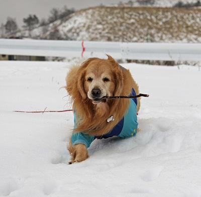 今週末は今シーズン最後(?)の雪遊び♪ PART2_c0216518_2043289.jpg