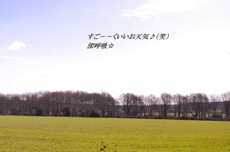 d0104926_204664.jpg