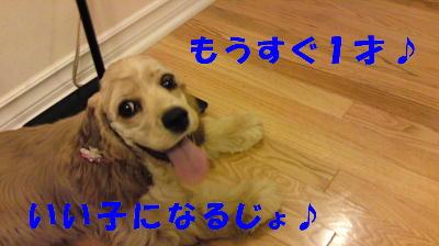b0176428_1210559.jpg