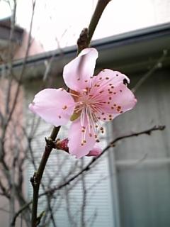 春の嵐?_c0036138_13552677.jpg