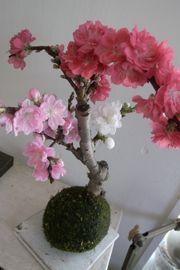 花は満開_a0068339_21582889.jpg