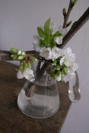 花は満開_a0068339_21584193.jpg