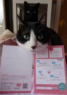 キャットシッターゆきねこ利用案内ポストカード猫 空のぇる編。_a0143140_16135022.jpg