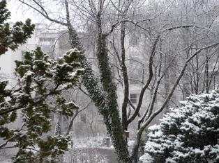 今日も雪☃_e0195766_19473948.jpg