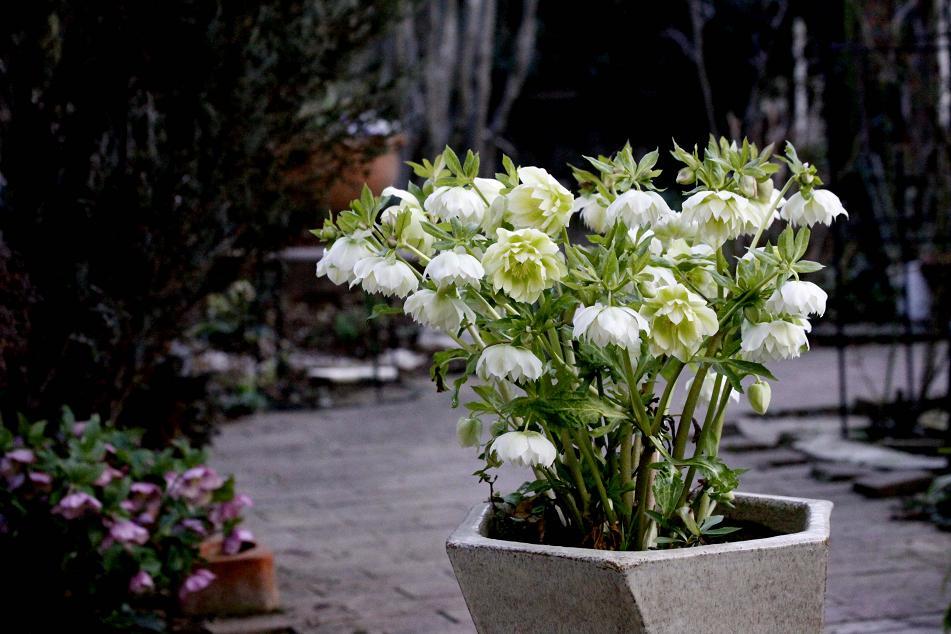この花を咲かせる為に犠牲にした花_a0107574_6363437.jpg