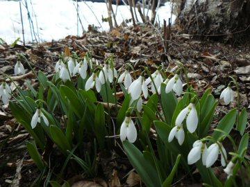 重たい雪の融けた下では_f0141975_15452456.jpg