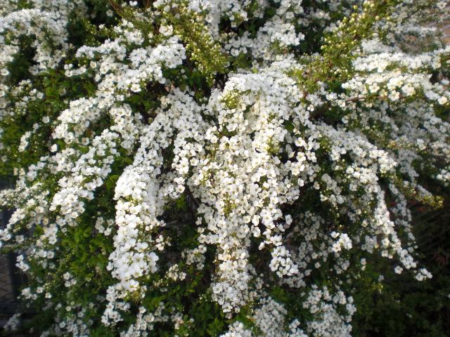 春の憂鬱_f0204295_16222597.jpg