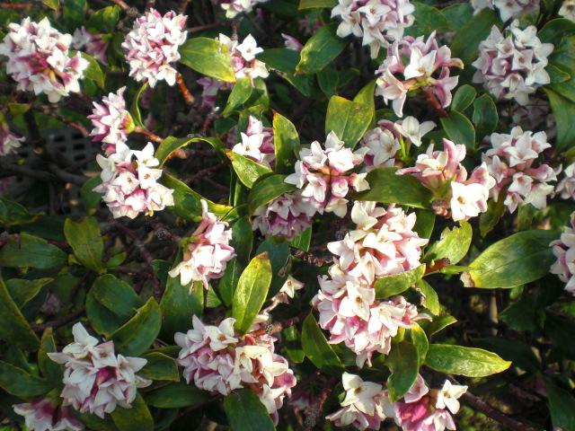 春の憂鬱_f0204295_1622410.jpg