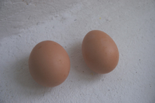 卵に日付を入れる_f0106597_1415981.jpg