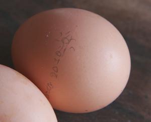 卵に日付を入れる_f0106597_1493057.jpg