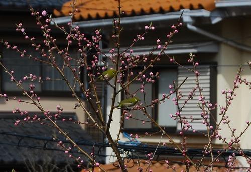 今年初咲き…その2_c0124100_12161580.jpg