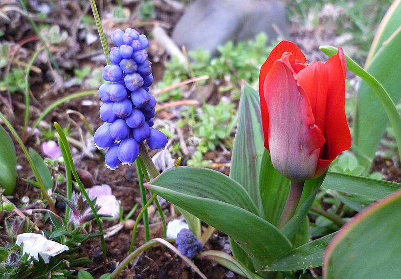 春の訪れが目前に_d0151813_23295970.jpg