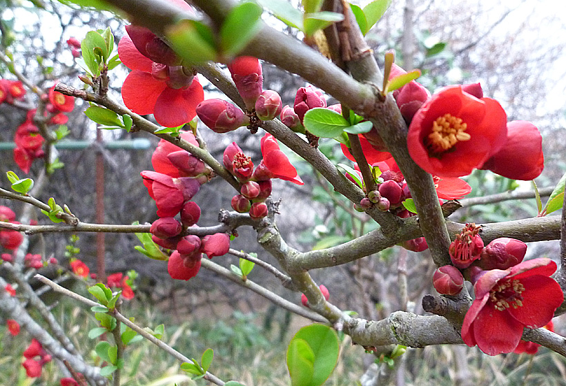 春の訪れが目前に_d0151813_23303919.jpg