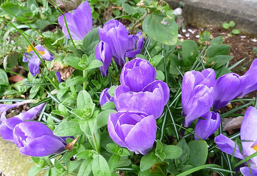 春の訪れが目前に_d0151813_23311722.jpg