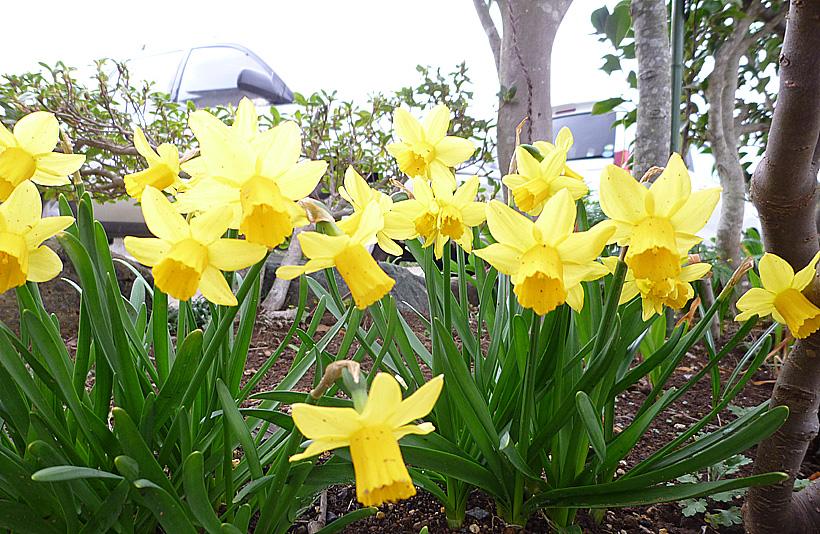 春の訪れが目前に_d0151813_23315532.jpg