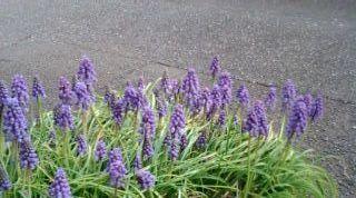 野々子ちゃん の 春_e0177713_1751123.jpg