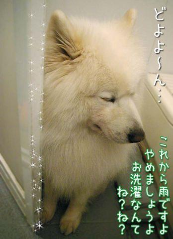 クロ本シローカ_c0062832_16475114.jpg