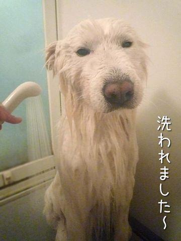 クロ本シローカ_c0062832_1648119.jpg