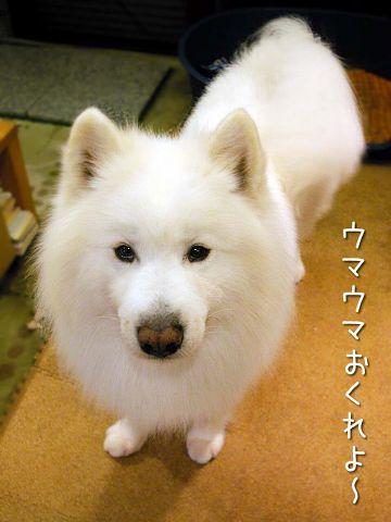 クロ本シローカ_c0062832_16482035.jpg