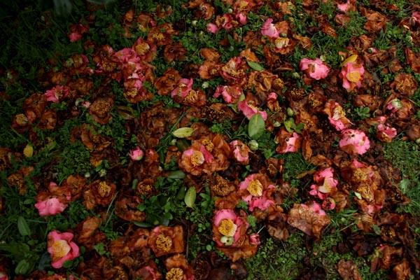 桜の頃 2_f0159642_13285774.jpg