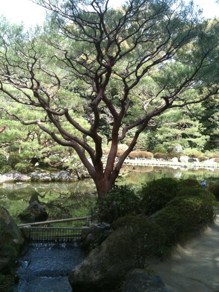 平安神宮no 2_f0184247_11181625.jpg