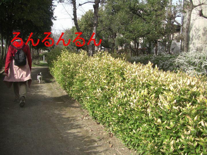 f0053952_22243452.jpg