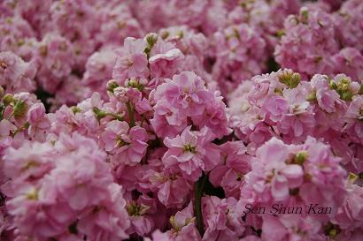 花の回廊 _a0164068_1515159.jpg