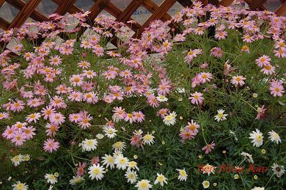 花の回廊 _a0164068_15151949.jpg