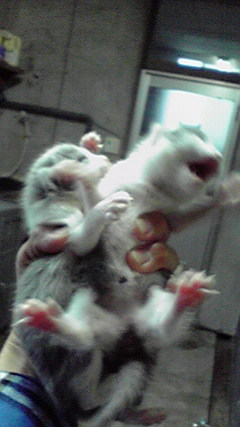 生きたい!……猫たちの叫び_c0167175_22425016.jpg