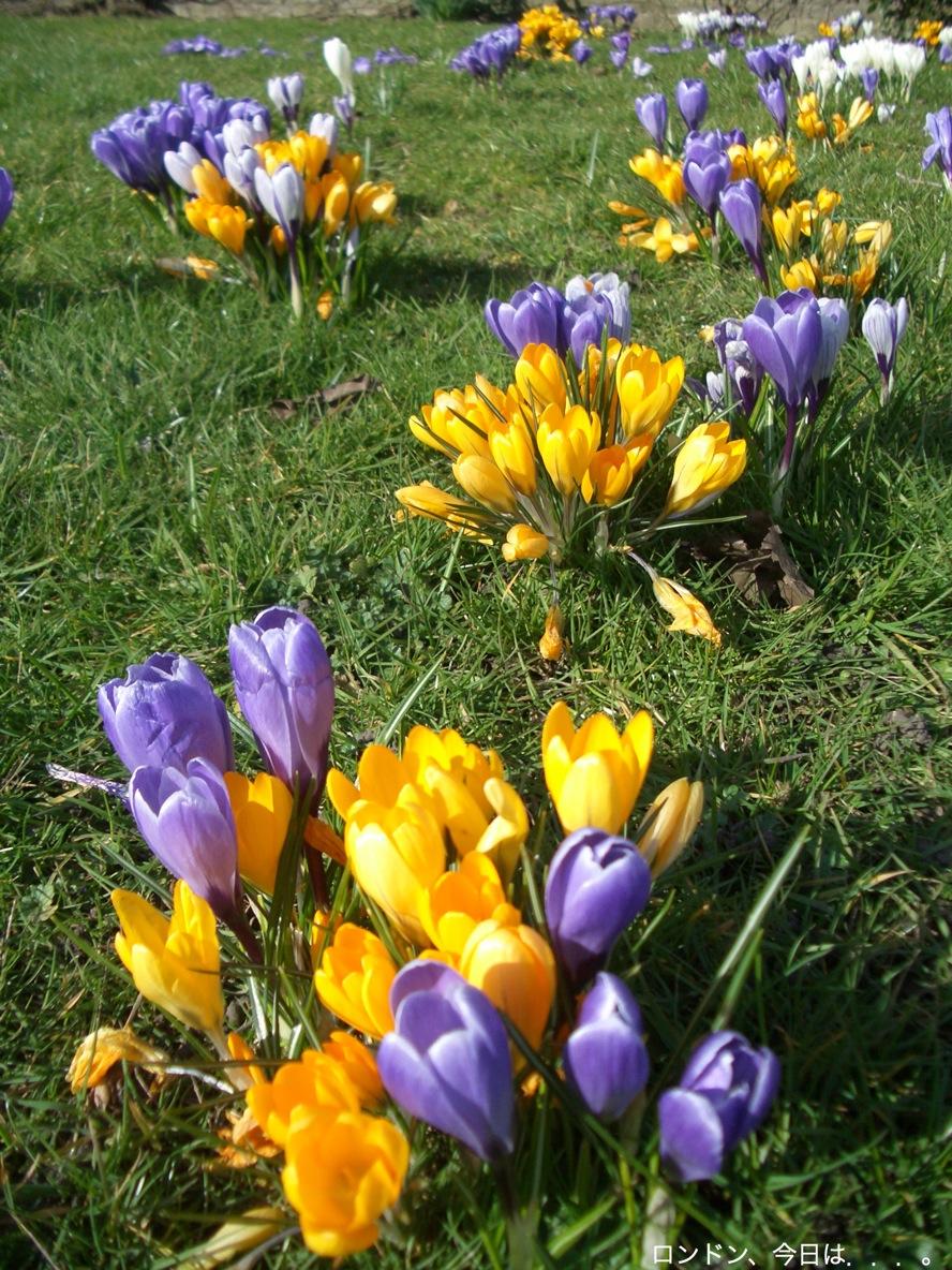 お久しぶり公園と春の兆し_a0137487_2032351.jpg