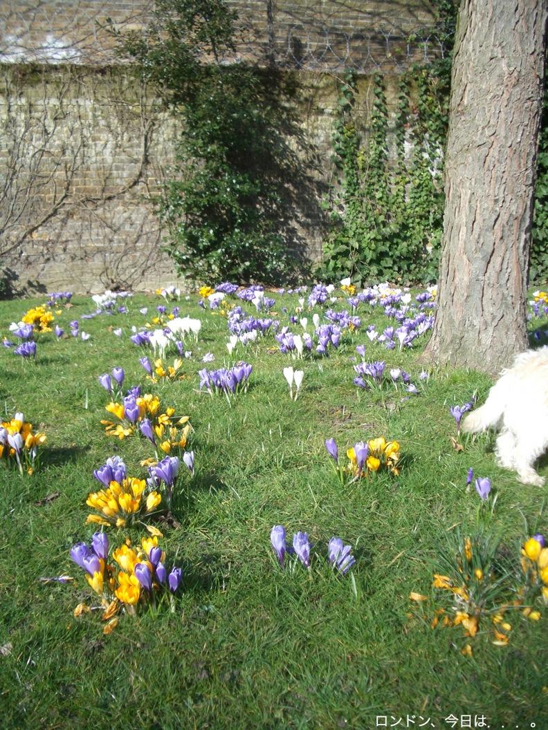お久しぶり公園と春の兆し_a0137487_2074227.jpg