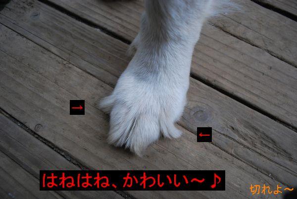 f0109202_10103239.jpg