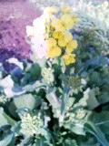 春の香り_e0192203_1024778.jpg