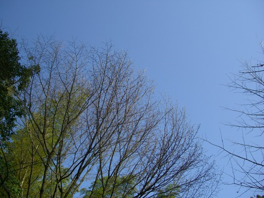 高良大社の桜_d0116009_2312261.jpg