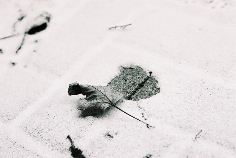 冬の想い出一葉_b0148617_13519100.jpg