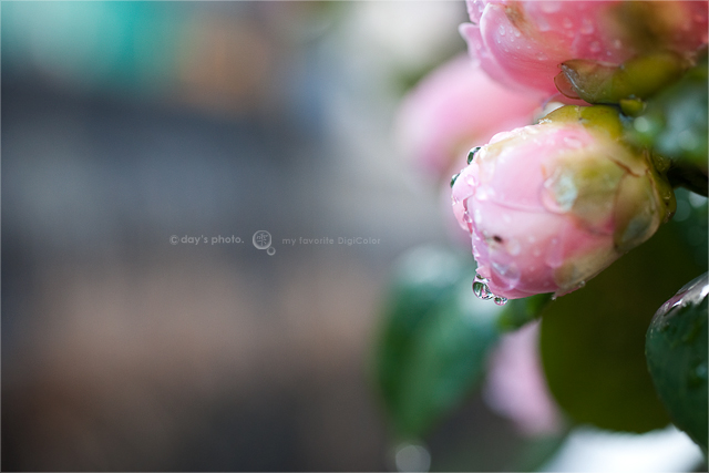 雨上がりの朝_e0117517_1953674.jpg